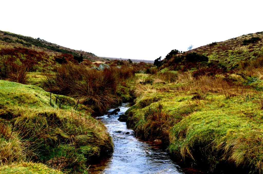 DartmoorC