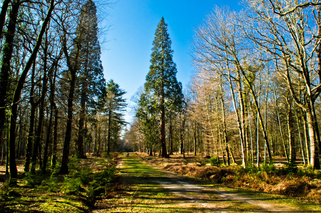 Ornamental Drive, New Forest
